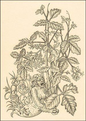 poison_oak2